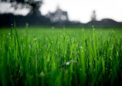 bg-grass2